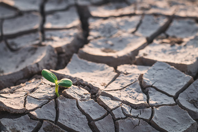 Can a Drought Cause Damage to My Home? Does Insurance Cover It?